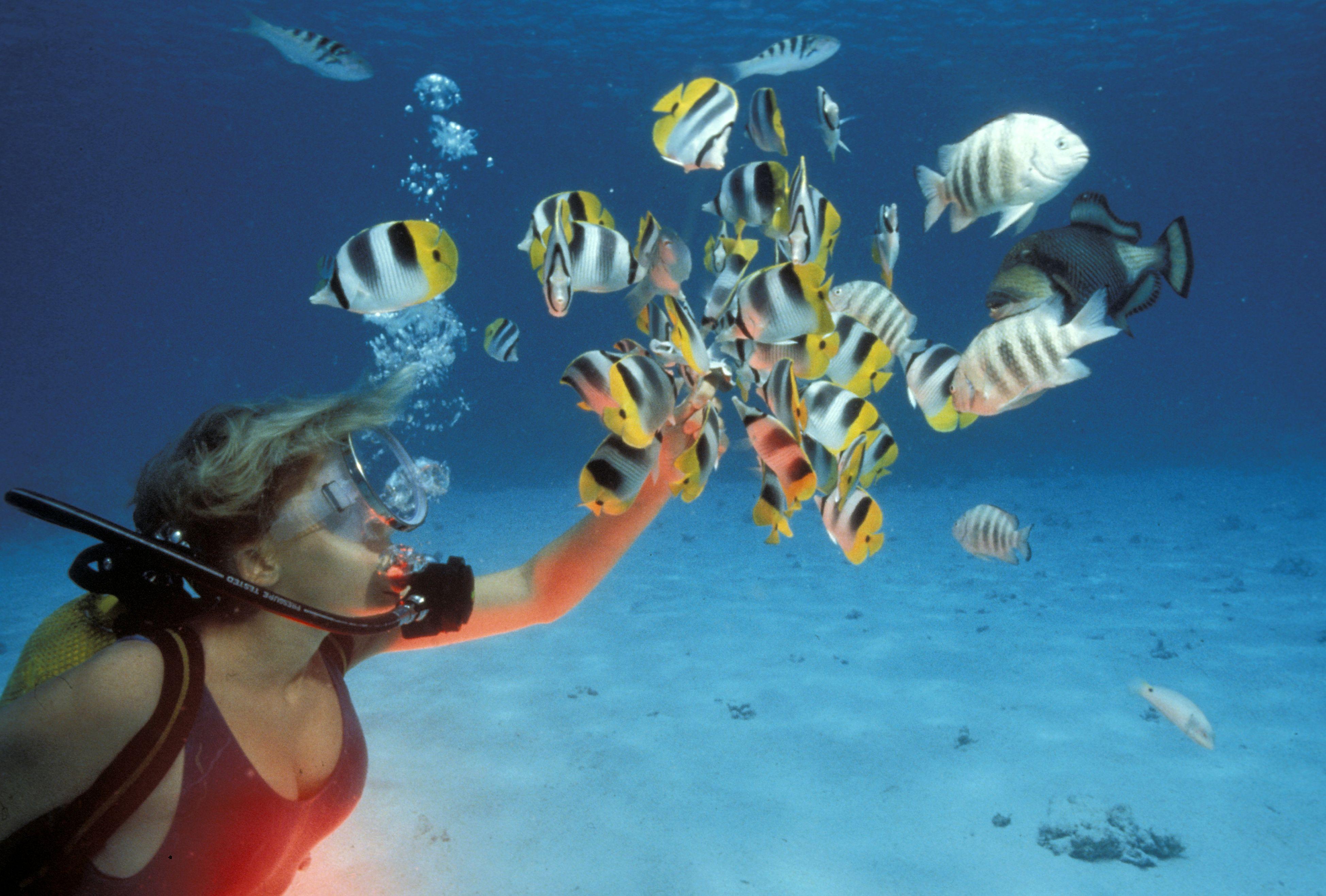 La plongée sous-marine : conseils pour débutant